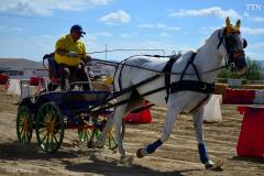 Feria del caballo 2015 Torrejoncillo