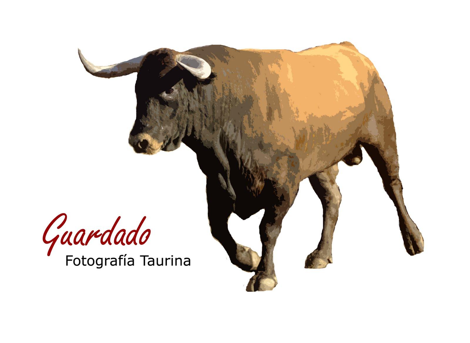 www.torrejoncillotodonoticias_antiguo_blog_0231