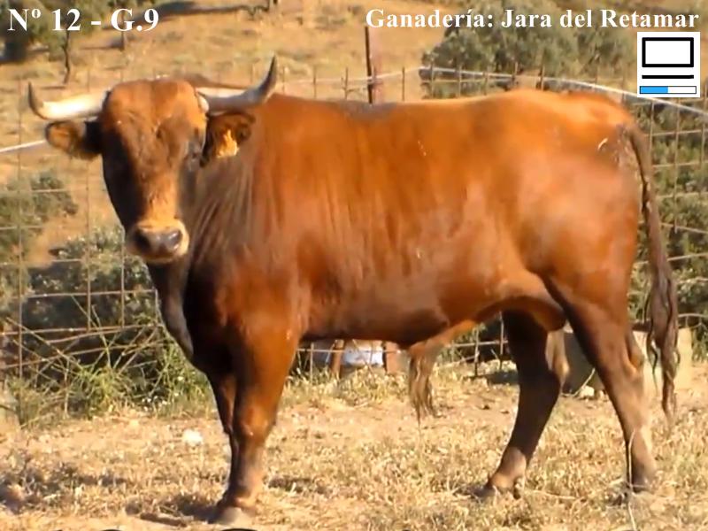 jara-de-retamar-n-12-guarismo-9