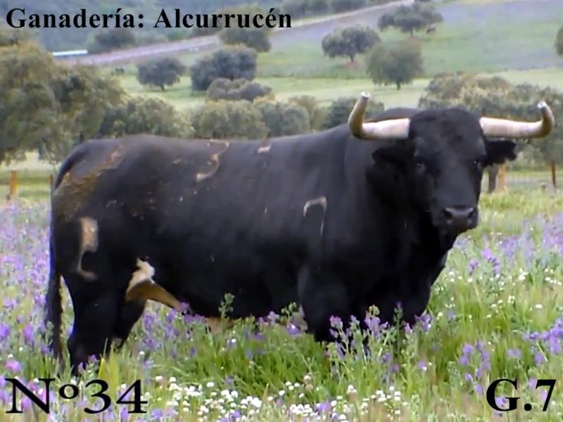 n-34-g7-alcurrucen-si