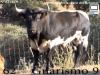 jara-de-retamar-n-62-guarismo-9
