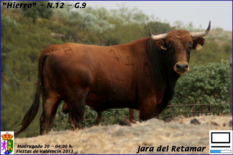 20-madrugada-jara-del-retamar-hierro-n-12-g-9