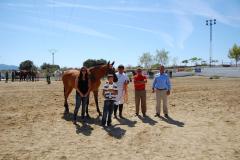XIV Feria del caballo y la artesanía de Torrejoncillo - 2010