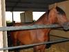 www.torrejoncillotodonoticias.com_xiv_feria_del_caballo_y_la_artesania_de_torrejoncillo_-_2010_0009