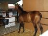 www.torrejoncillotodonoticias.com_xiv_feria_del_caballo_y_la_artesania_de_torrejoncillo_-_2010_0010