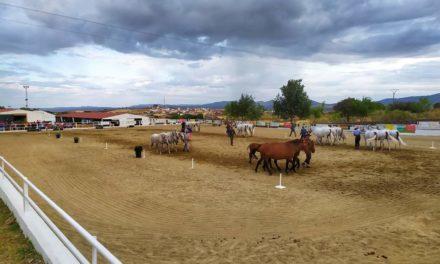 Torrejoncillo presenta su Salón del Caballo al que acudirán más de treinta ganaderías a nivel internacional