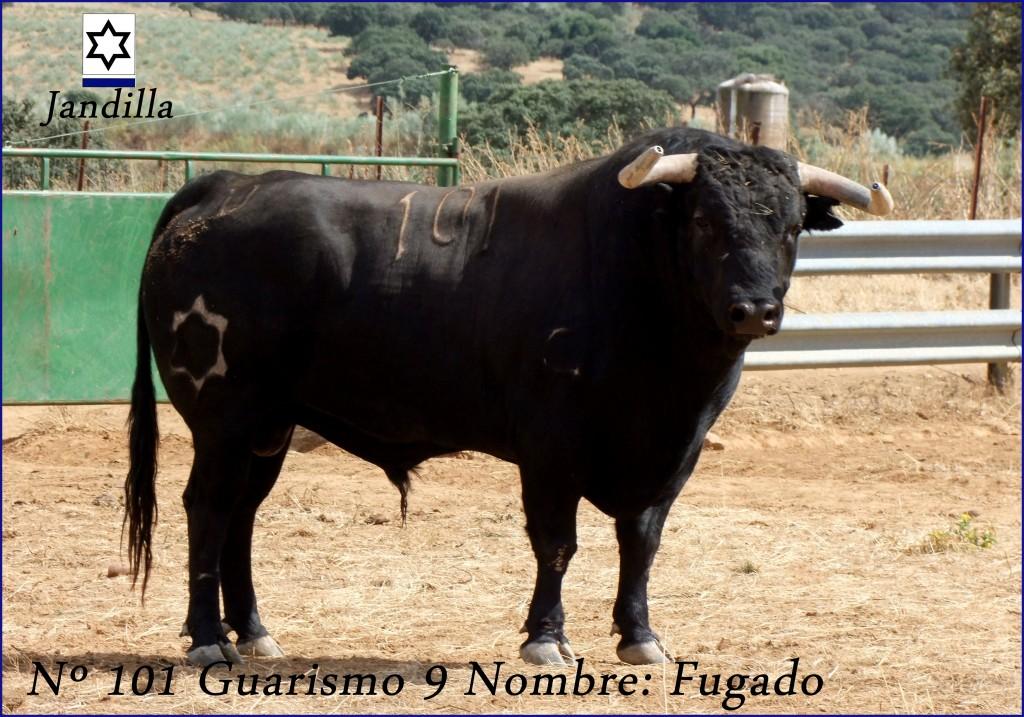 101 G9 FUGADO JANDILLA