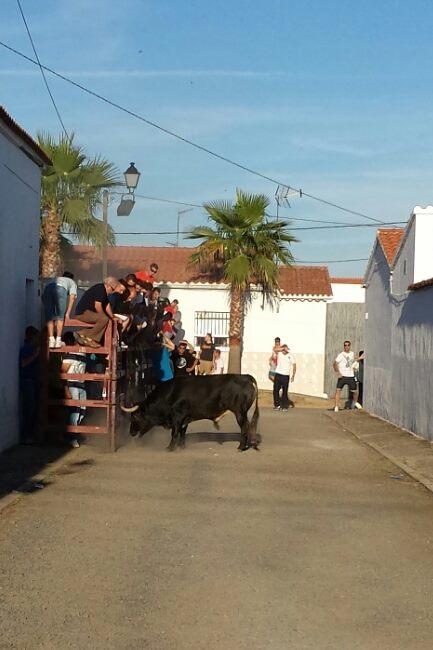 """Las fiestas de Valdencín 2014 vistas """"a toro pasado"""""""