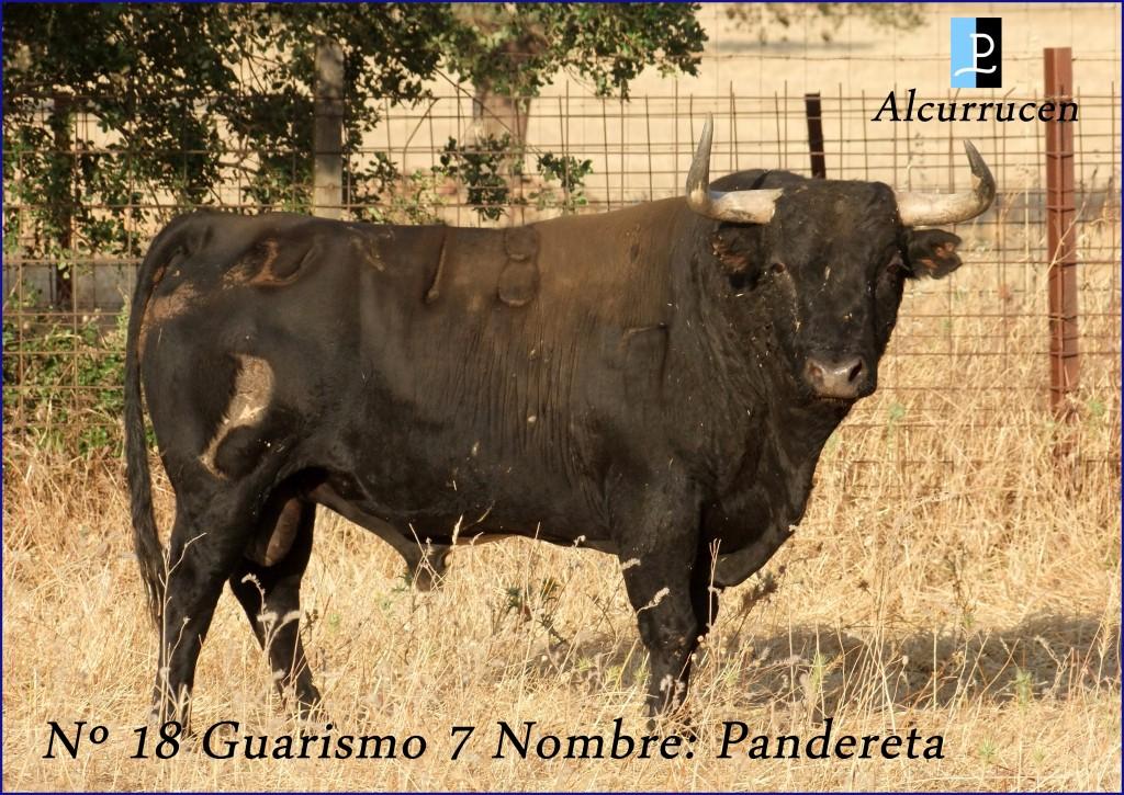 18 G7 PANDERETA  ALCURRUCEN