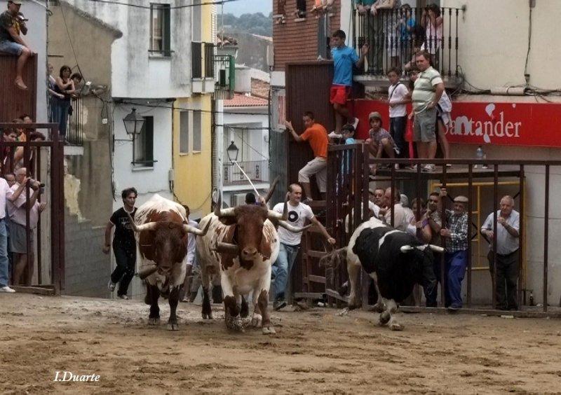 Ferias y Festejos