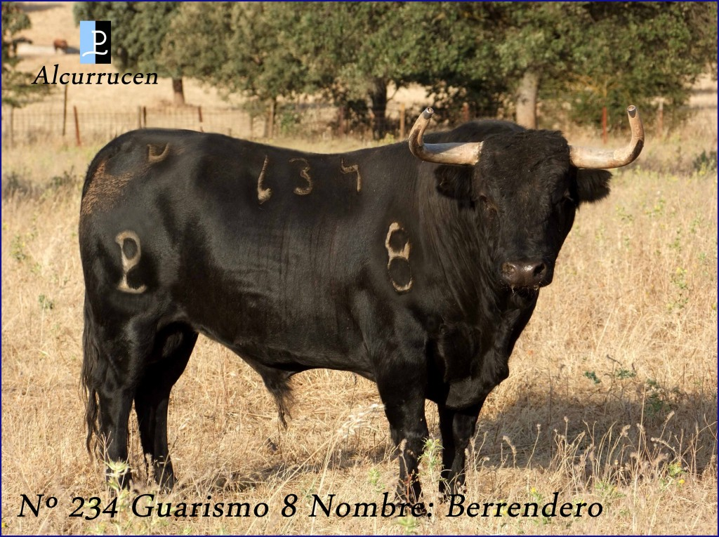 234 G8 BARRENDERO ALCURRUCEN