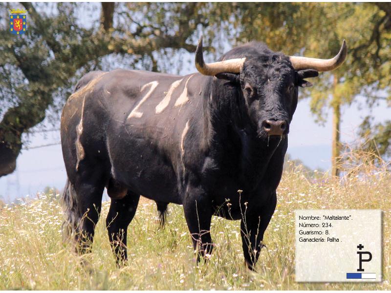 Coria presentó sus toros para San Juan 2013
