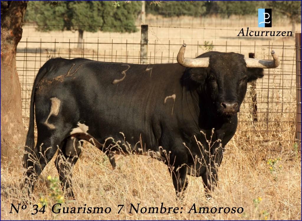 34  G7 AMOROSO ALCURRUCEN