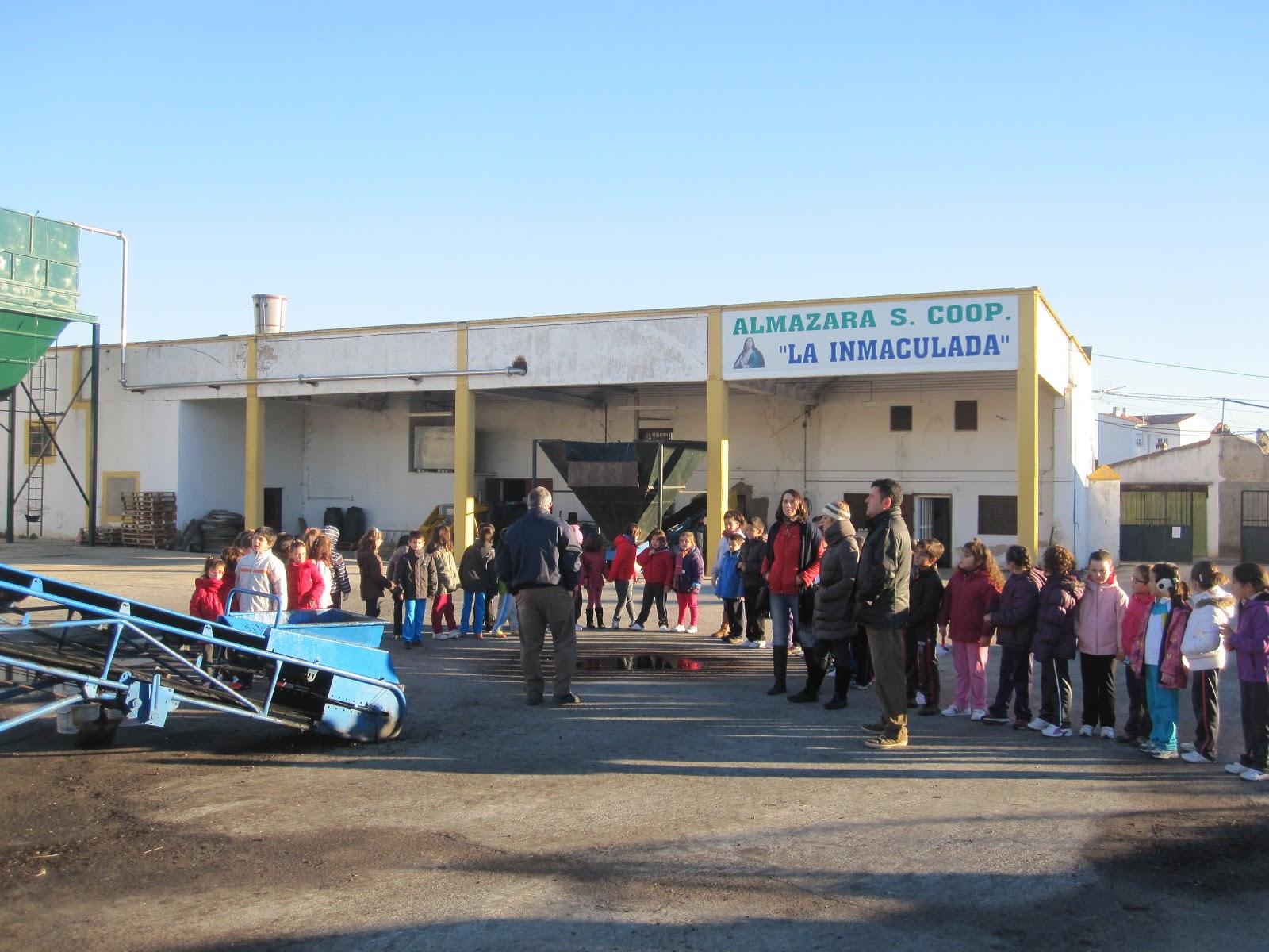 Ultimo día para entregar aceitunas y Asamblea General Ordinaria de la Soc. Coop. Del Campo la Inmaculada