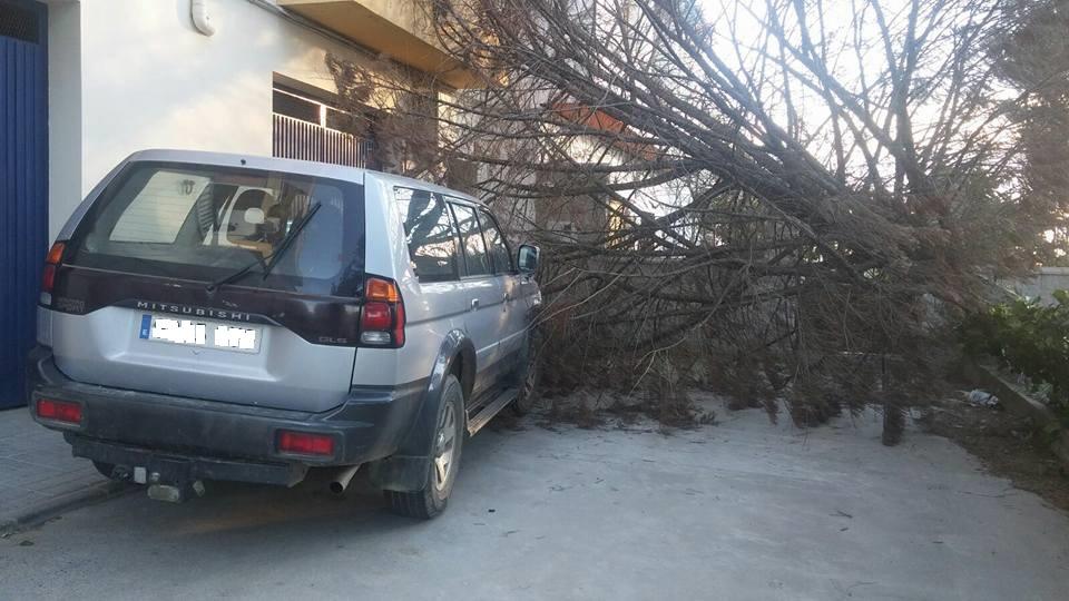 El mal tiempo provoca la caída de un árbol en la carretera de Ciudad Rodrigo