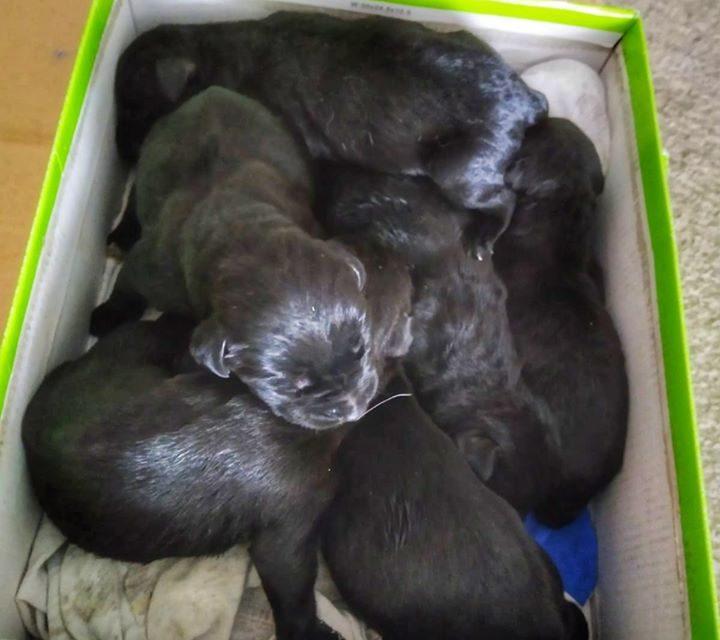6 cachorritos abandonados en un contenedor