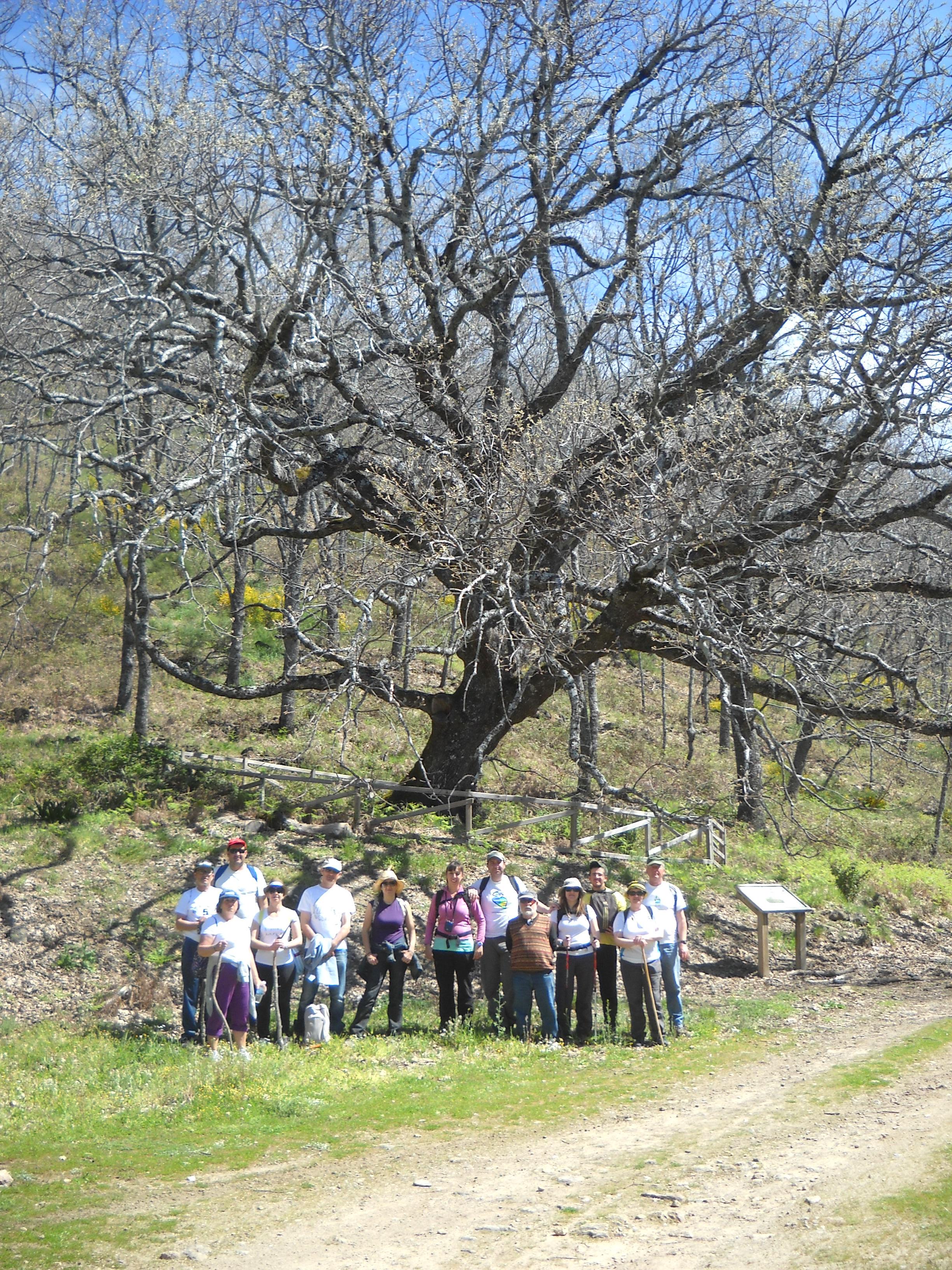«El Robledal de la Solana» de Barrado, un privilegio para los senderistas