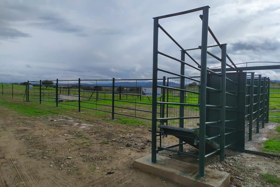 La Dehesa Boyal de Torrejoncillo, un espacio mejorado y en equilibrio entre el monte y la actividad agropecuaria