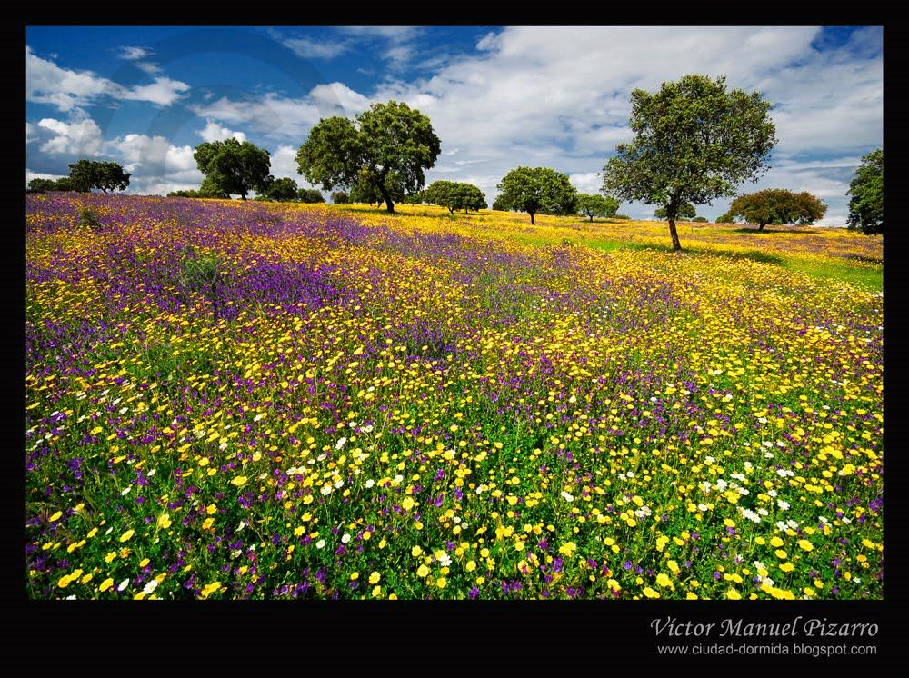 El valle del Alagón se 'abraza' a la Primavera