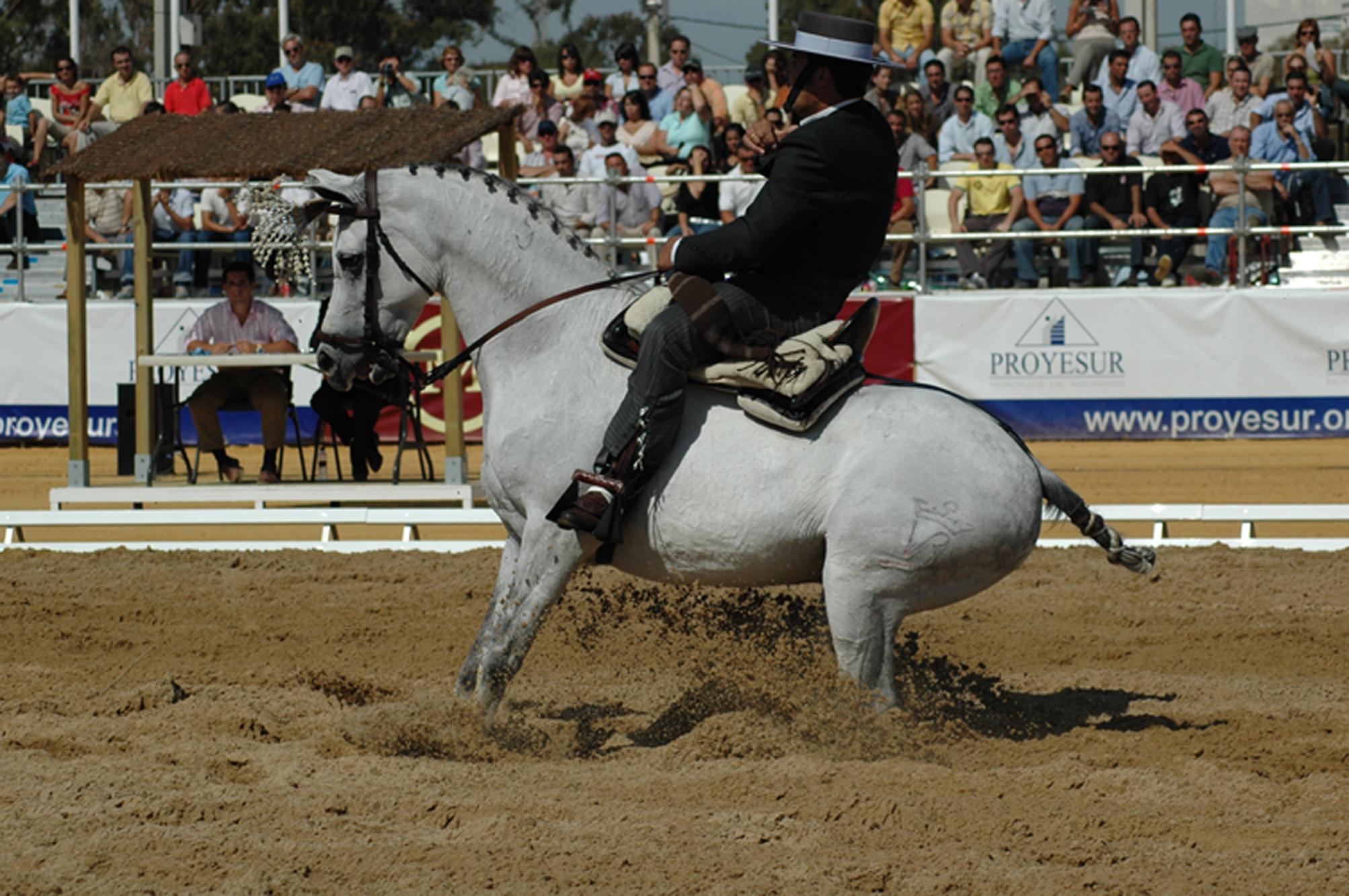 Torrejoncillo acoge este sábado una Exhibición de Doma Vaquera y Alta Escuela