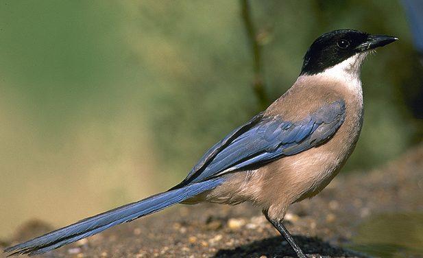 Algunos pájaros traviesos