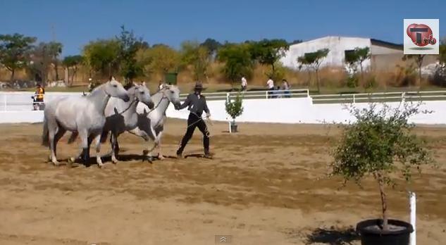 Éxito de la XVI Feria del Caballo, Artesanía y Alimentaría de Torrejoncillo en 2013