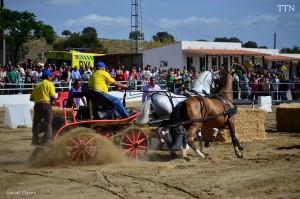 Feria del Caballo y Artesanía Torrejoncillo
