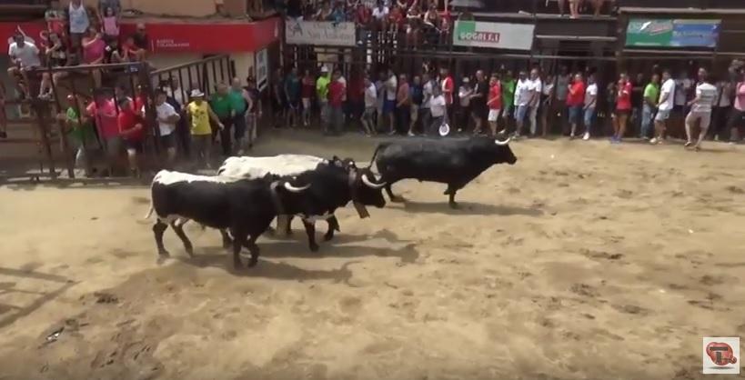 Toros de Torrejoncillo 2018