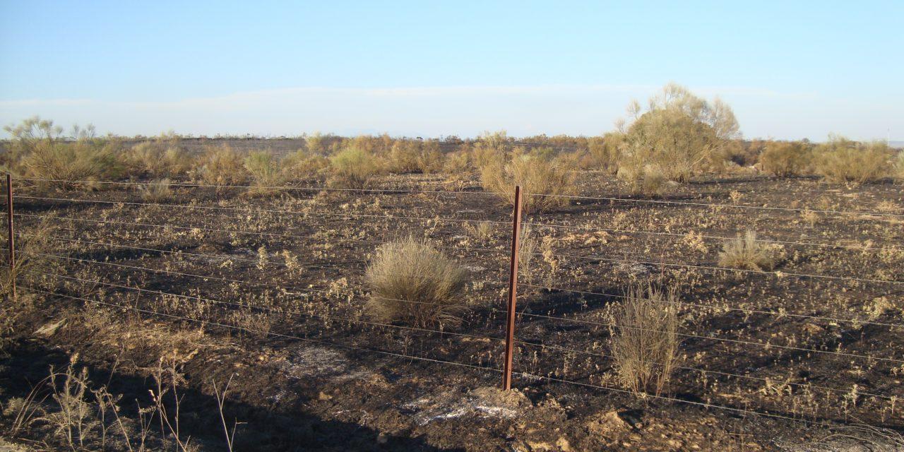Gran despliegue de medios para sofocar el incendio de esta tarde en Torrejoncillo