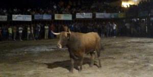 """""""Hierro"""", de Jara del Retamar, durante su lidia en la plaza de toros de Valdencín - CEDIDA"""