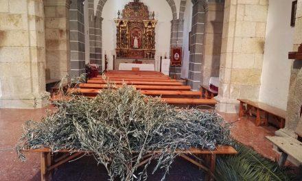 Procesión del Domingo de Ramos desde San Saturnino