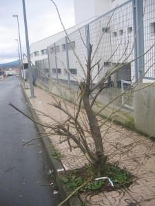 El árbol deforme