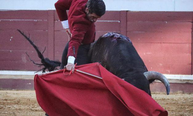 Pleno de triunfos en el festival de Lucena