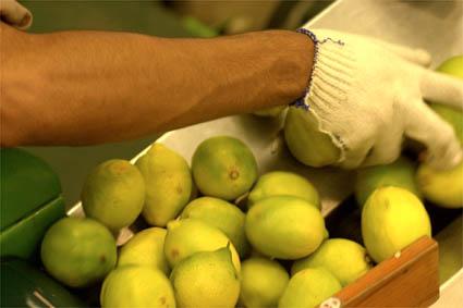 Imagen de limones