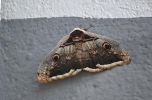 Mariposa TTN