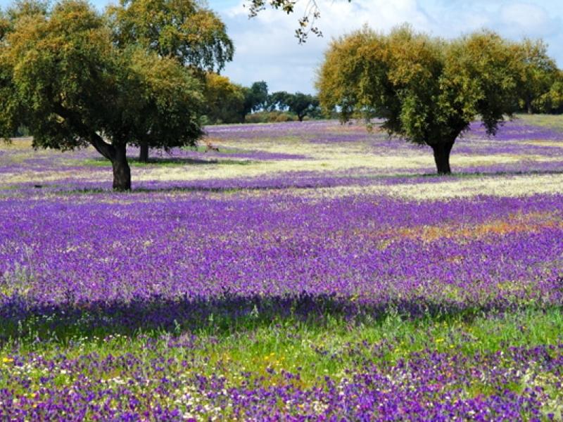 Continúan los fines de semana de Primavera en la Dehesa 2013