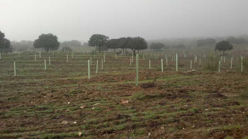 En dos años se reforestará la Dehesa de Torrejoncillo con 25.000 encinas y alcornoques