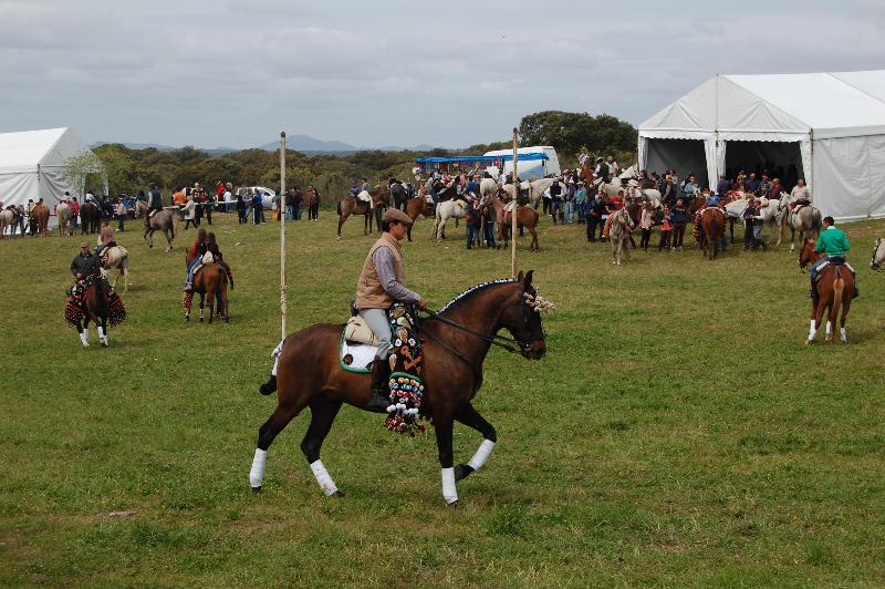 El caballo es protagonista indiscutible en la Romería de San Pedro de Torrejoncillo - JOSÉ PEDRO MARTÍN