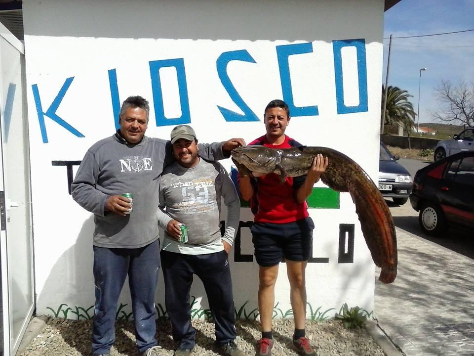 22 Kilos de Siluro el fin de semana pasado por pescadores torrejoncillanos