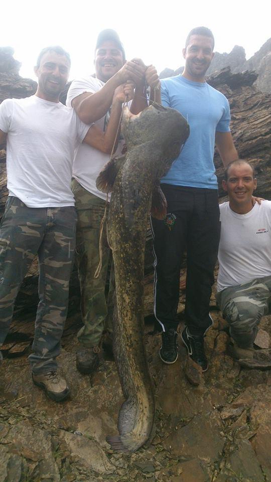 Pescadores torrejoncillanos capturan un siluro impresionante