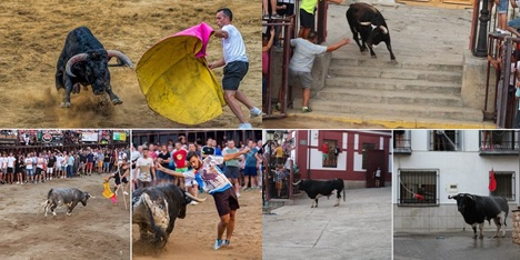 """Finalistas Concurso Fotográfico """"Toros Agosto 2018"""""""