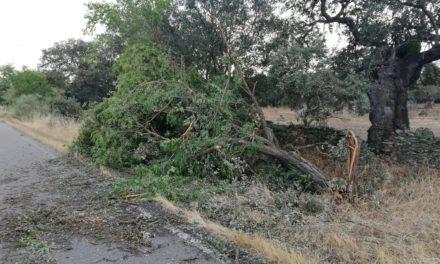 Varios arboles tronchados por el temporal