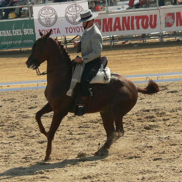 Una veintena de caballos compiten en Portaje en el Nacional B de Doma Vaquera