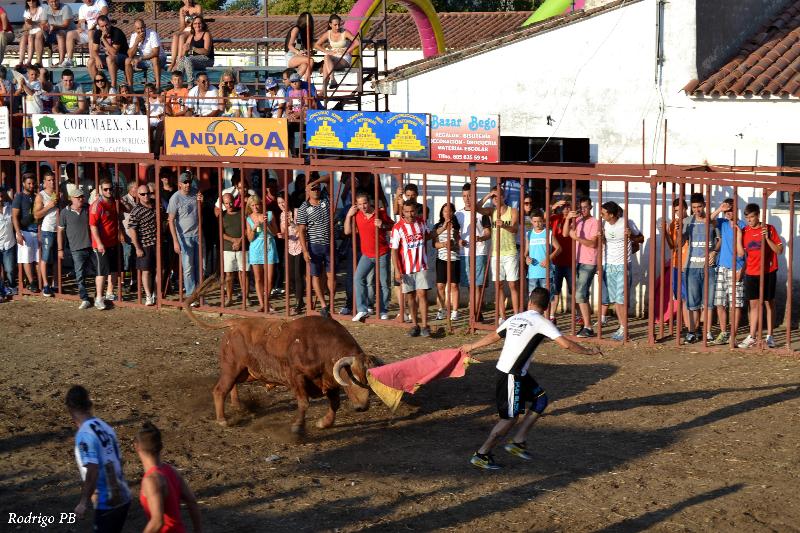 Un descastado Urcola revuelca a un mozo en el último festejo de las fiestas de Valdencín