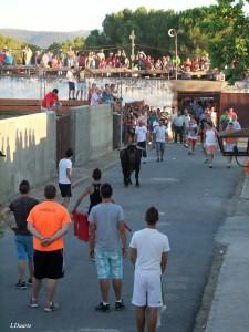 En Fiestas de Valdencín 2012 fue el primer año en el que el toro salió a las calles en el festejo de la tarde - ISMAEL DUARTE