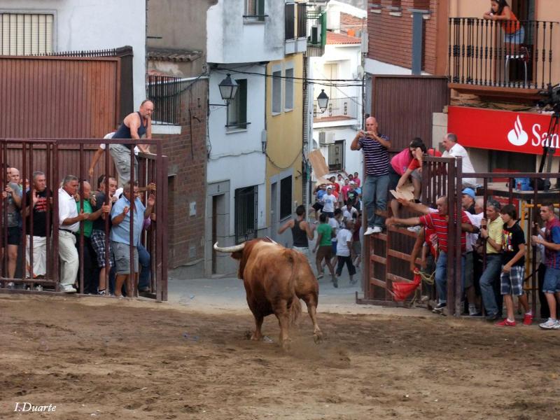 La suelta del toro a las calles, atractivo principal de las Fiestas de Agosto de Torrejoncillo - ISMAEL DUARTE