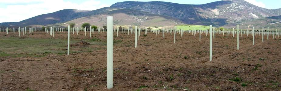 Agricultura destinará 642.237,12 euros a obras de regeneración de arbolado en montes de la provincia de Cáceres