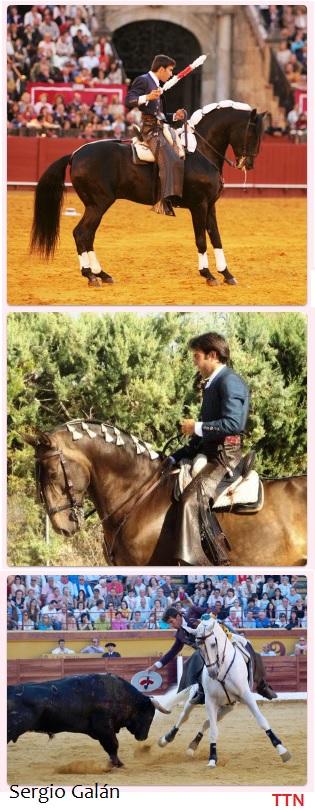 puesta a punto del caballo